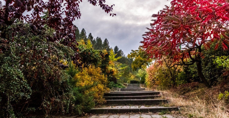 stairs, garden