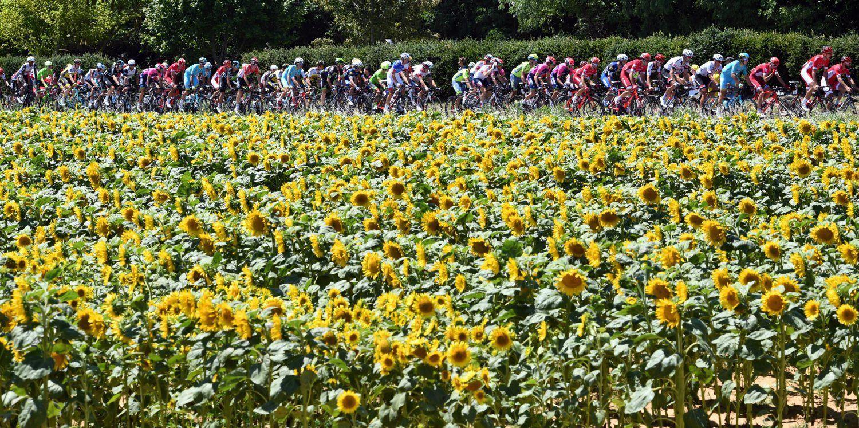 sunflowers bikers