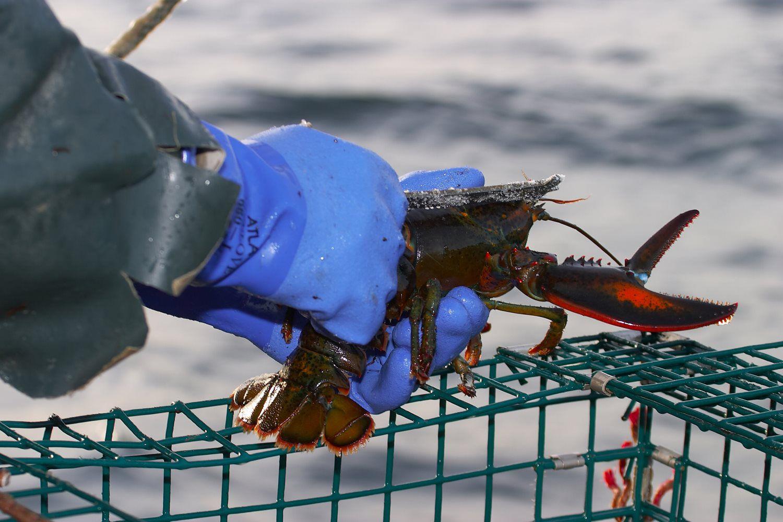 Home - Ready Seafood Co