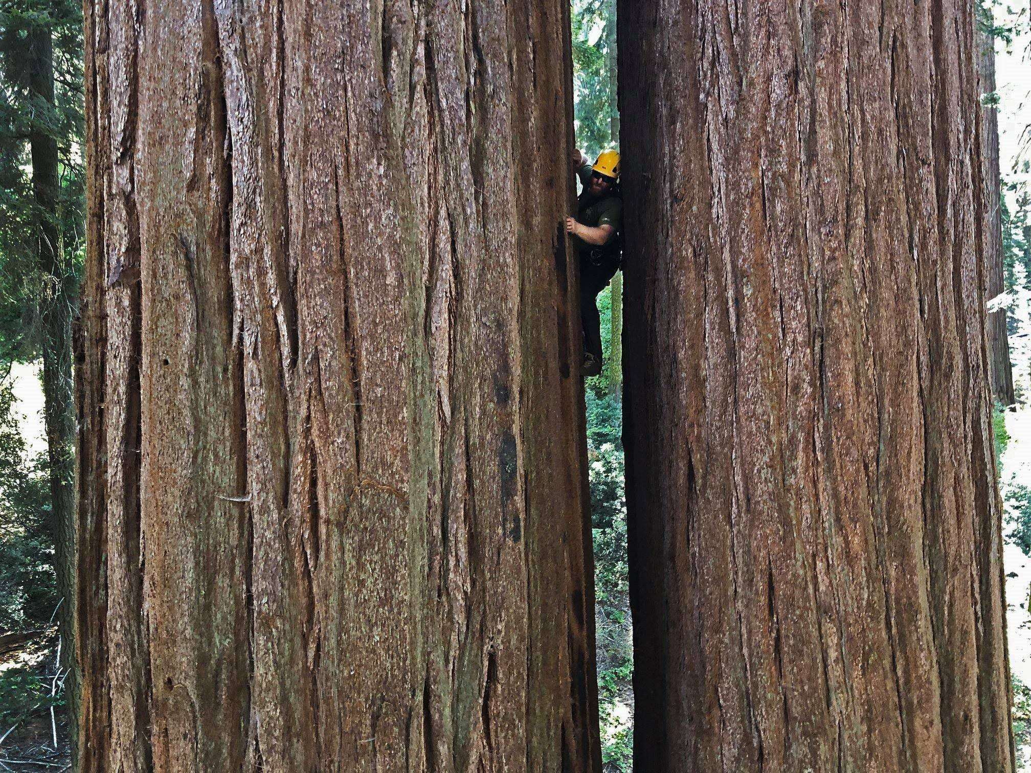 climbing at the tree