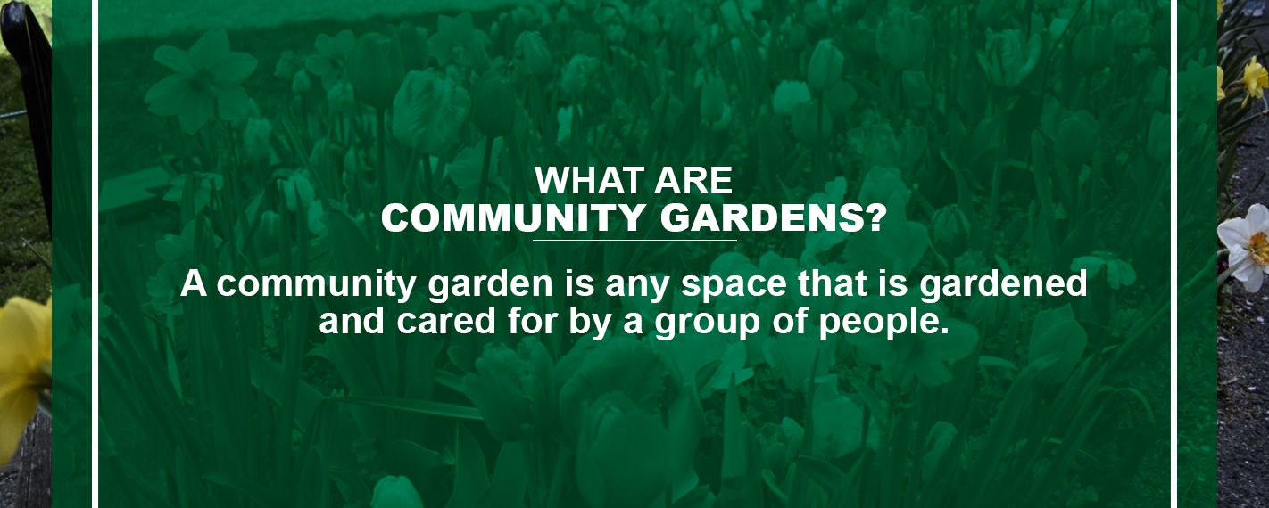 What are Community Gardens?