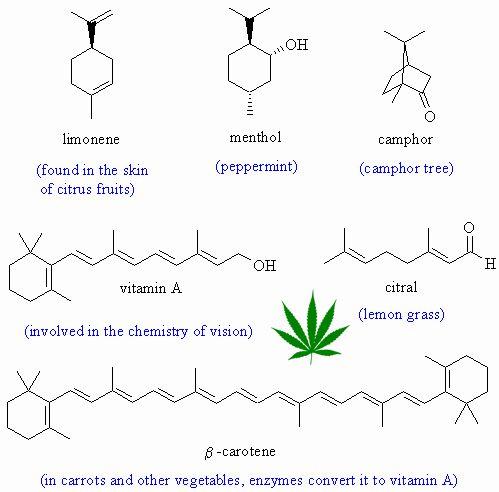 terpene-educational-series-part-one