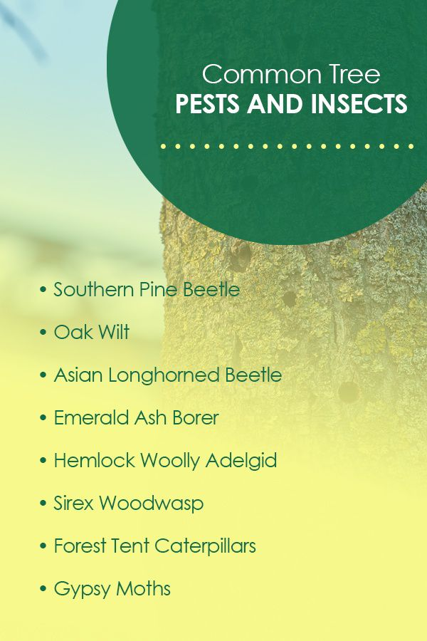 Common Tree Pests and Insects