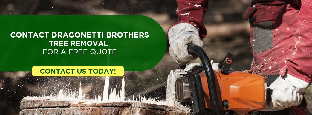 Contact Dragonetti Brothers Tree Removal