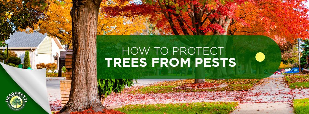How to Protect Trees from Pests