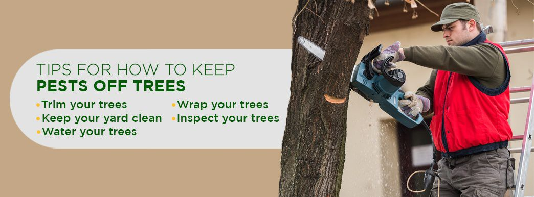 Tips for How to Keep Pests Off Trees