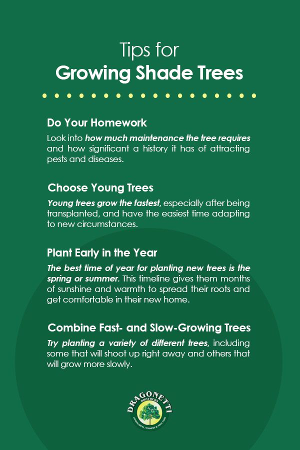 Tips for Growing Shade Trees