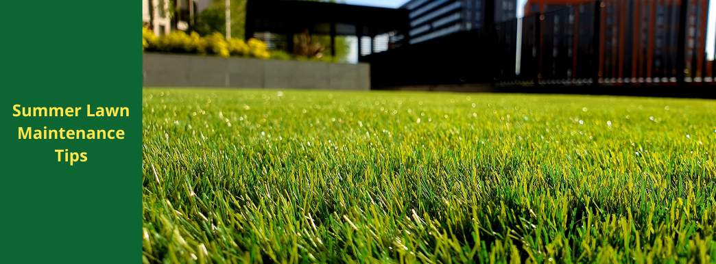 Summer Lawn Maintenance Tips
