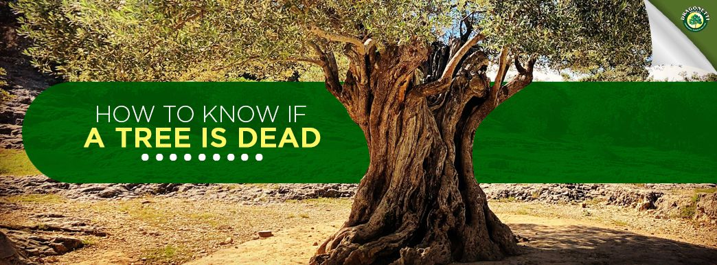 How to Know if a Tree is Dead