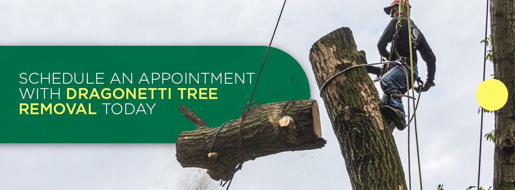 Tree Removal Services in NYC