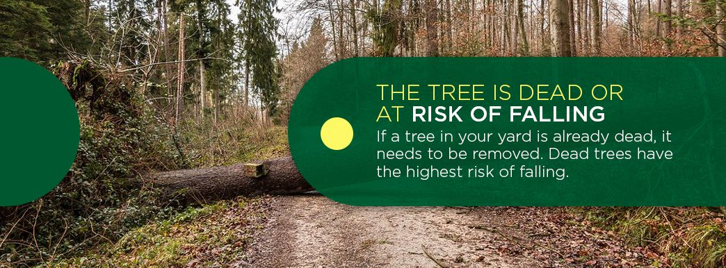 Dead Trees have a High Risk of Falling