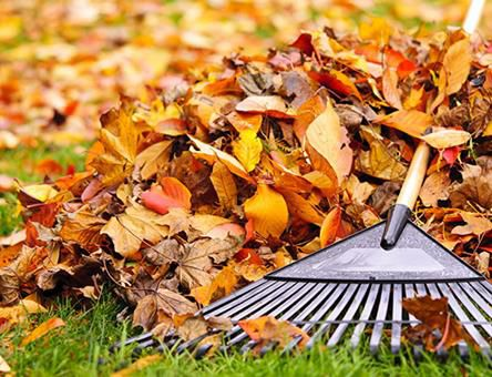 fall-yard-and-garden-tips