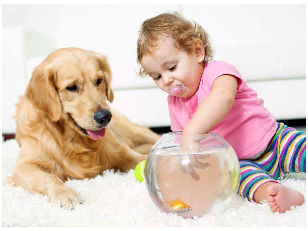 golden retriever and female toddler on carpet