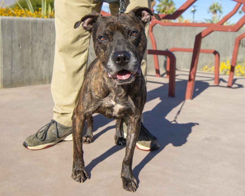 Palm Springs Animal Care - Friends of the Palm Springs