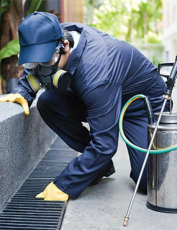 Pest and termite removal yellow jacket termite pest control llc elizabeth nj reheart Choice Image