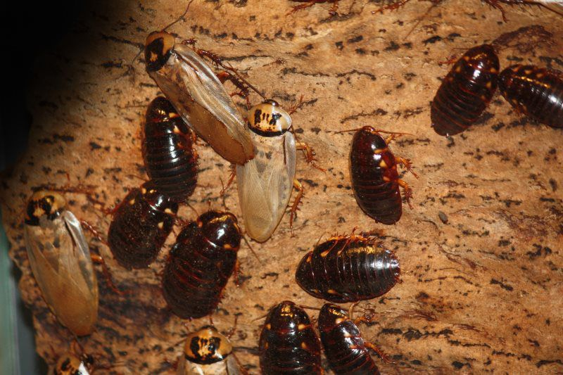 Pest and termite removal yellow jacket termite pest control llc general pest reheart Choice Image