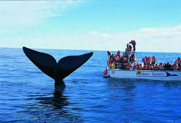 whale-watching-arg.jpg