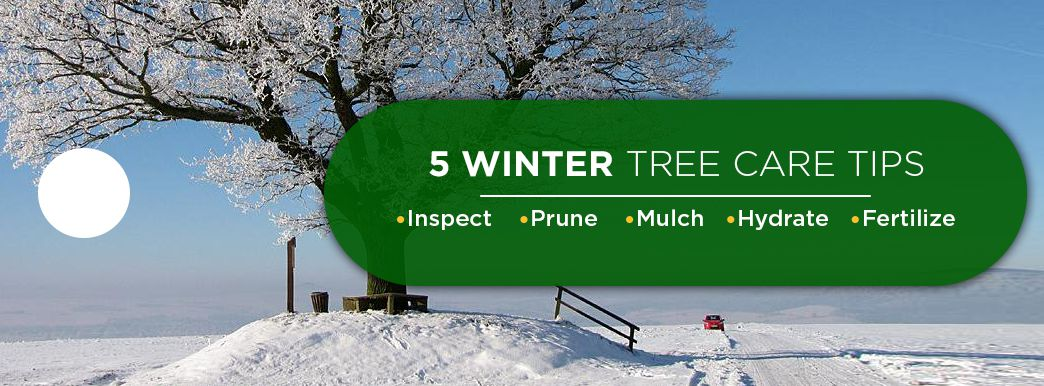 5 Winter Tree Care Tips