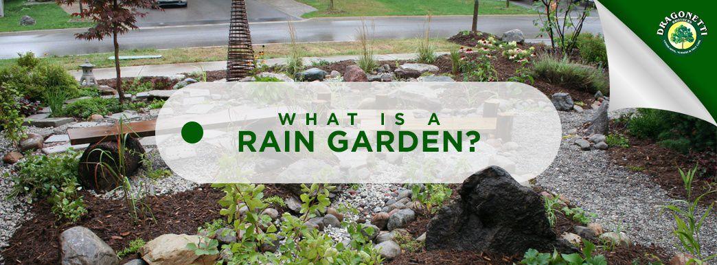 What is a Rain Garden