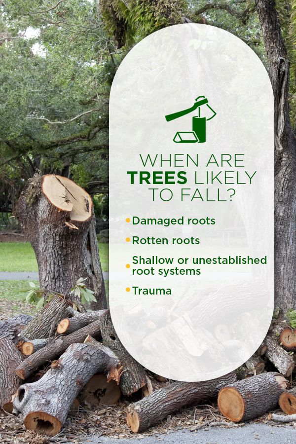 When are Trees Likely to Fall