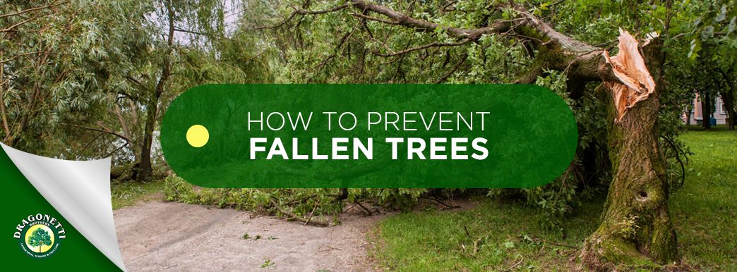 How to Prevent Fallen Trees