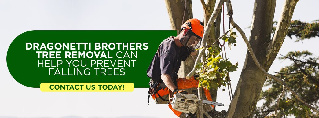 Falling Tree Services in NYC