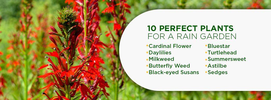 10 Plants for a Rain Garden