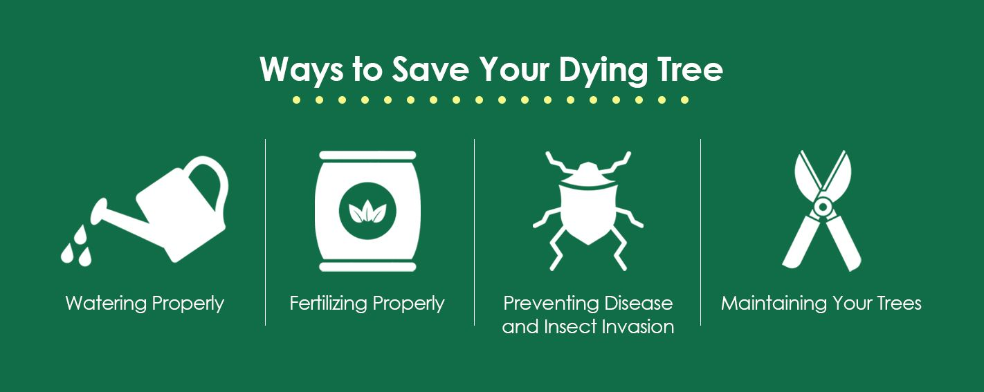 Ways to Save Your Dying Tree