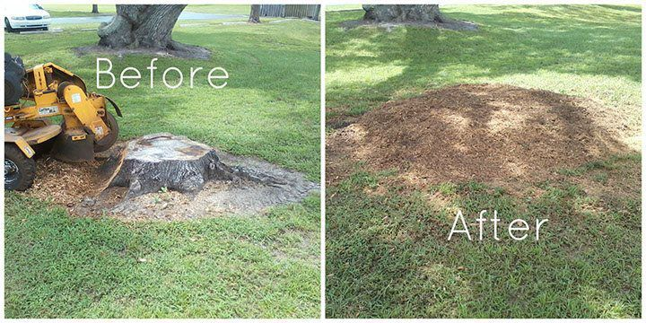 before and after tree cutting