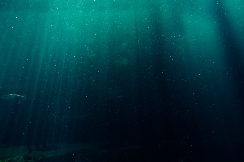 underwater rays backdrop