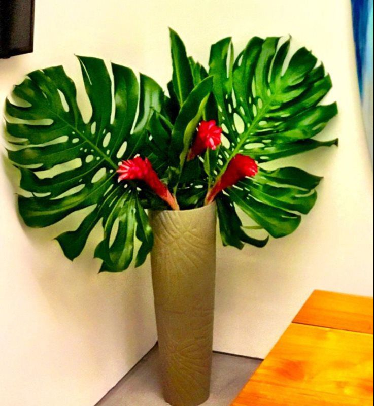 Indoor Plants For Positive Energy - Homes and Harmony Feng Shui and