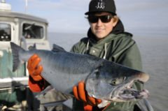 Copper River Coho Boasts Healthy Harvest for web.JPG